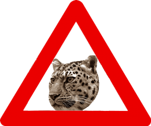 амурский леопард, угрозы