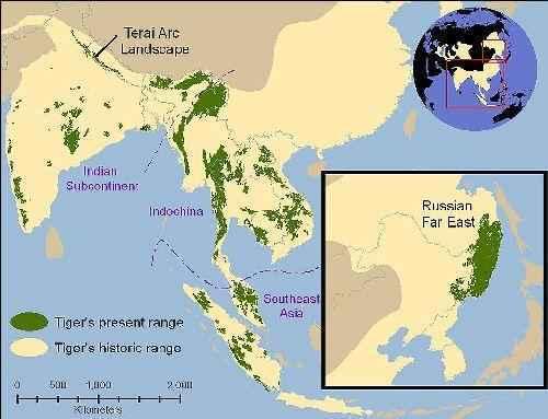 Прежний и сегодняшний ареал обитания тигров