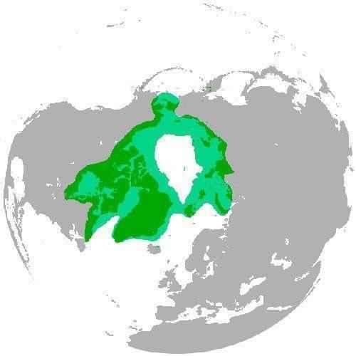 ареал белых медведей на карте