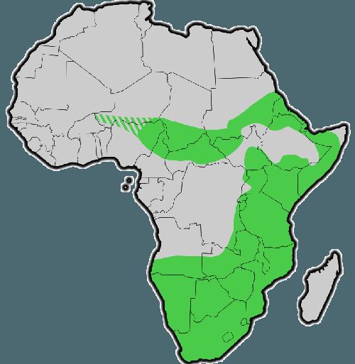 Исторический ареал обитания черного носорога на карте