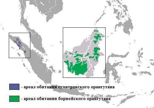 Ареал обитания суматранского и борнейского орангутана