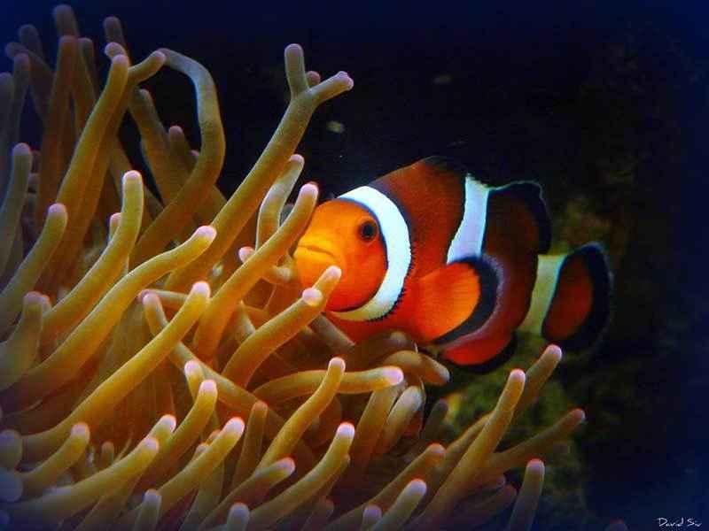 Какие виды рыб обитают в Красном море - названия, фото и характеристика 6