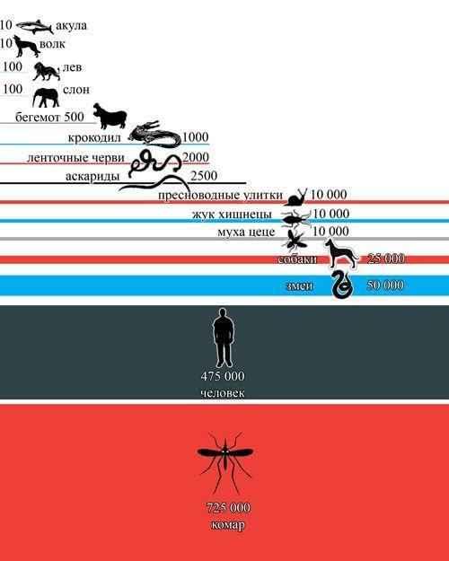 Количество людских жертв за год от рук человека и животных