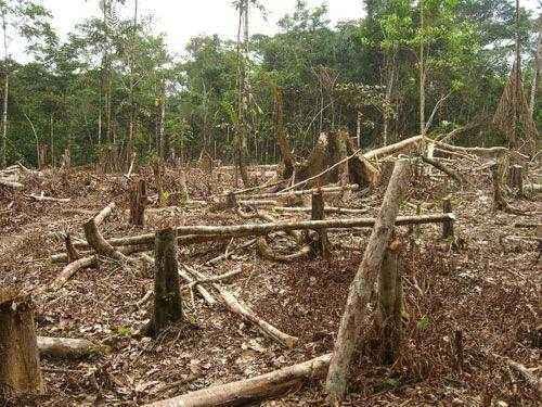 Последствия вырубки тропических лесов