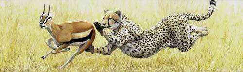 фото скоростной погони гепарда