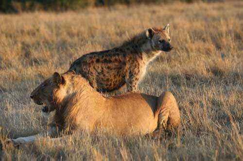 африканские хищники