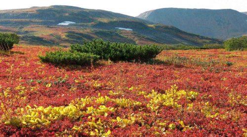Естественная (природная) экосистема - описание, признаки, виды и примеры 7