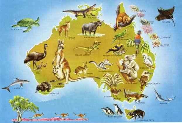 Природа Австралии Животный мир Австралии