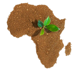растительный-мир-африки