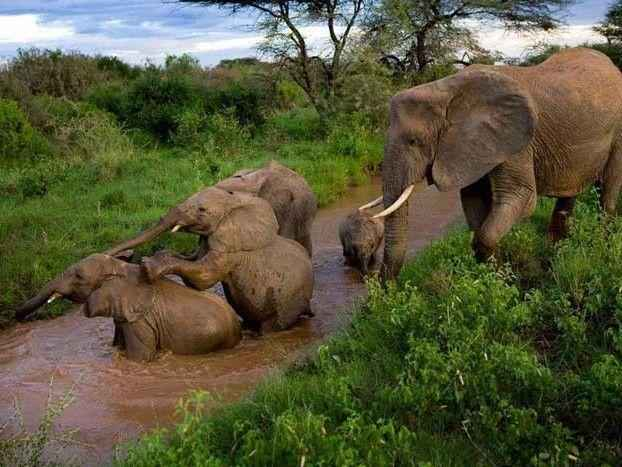 Слоны-в-Национальном-парке-Пенджари