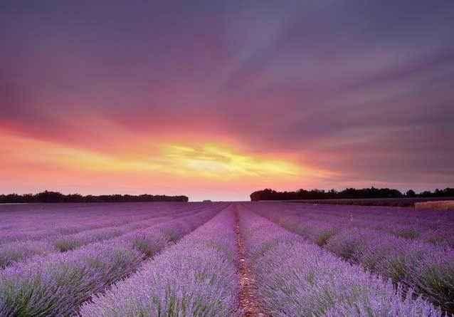 Лавандовые-поля-Франции