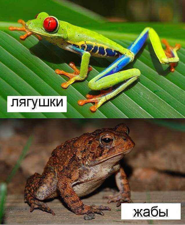 Лягушки-и-жабы