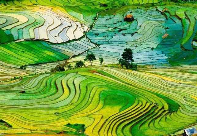 Рисовые-террасы-Вьетнама
