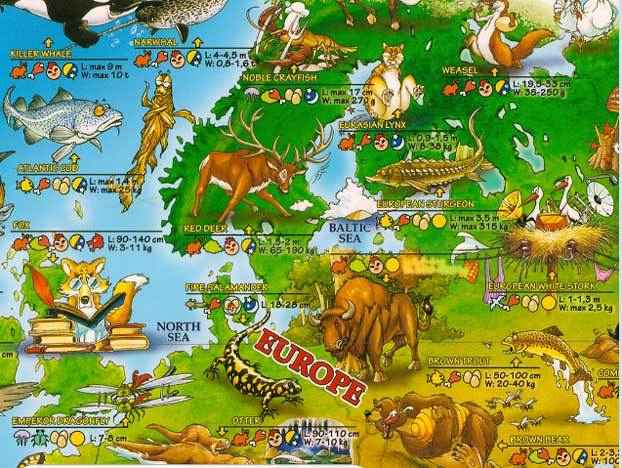животный-мир-европы