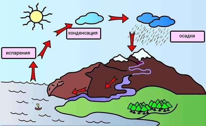 Схема круговорота воды в биосфере фото 104