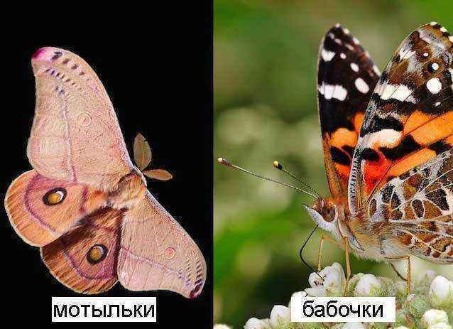 мотельки-и-бабочки