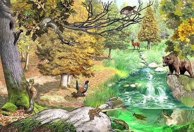 Лесное природное сообщество: особенности, значение для человека, флора и фауна 4