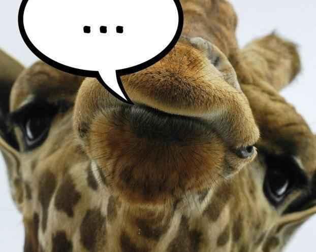 общение жирафов