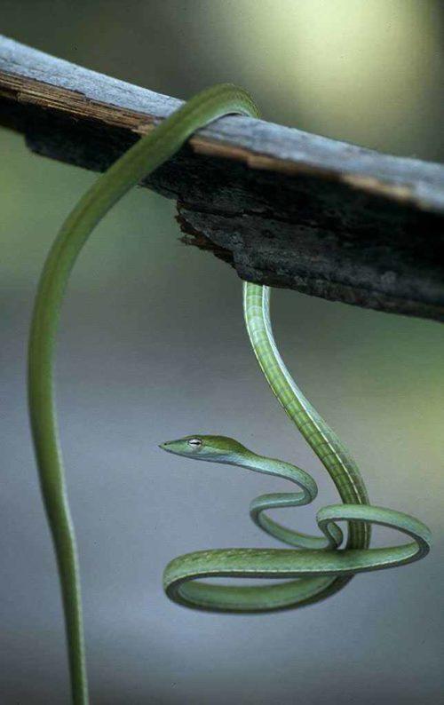 Самые красивые виды змей на планете - список, характеристика и фото 6