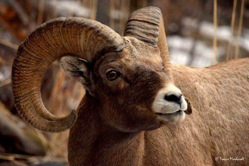 Редкие животные из Красной книги Забайкальского края — список, характеристика и фото 3