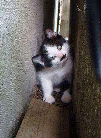 котенок с усами