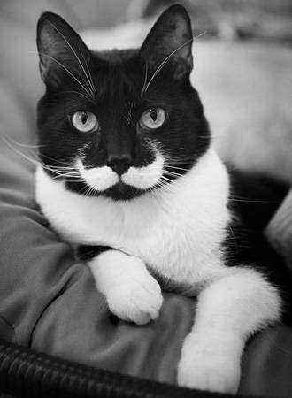 кот с белыми усами