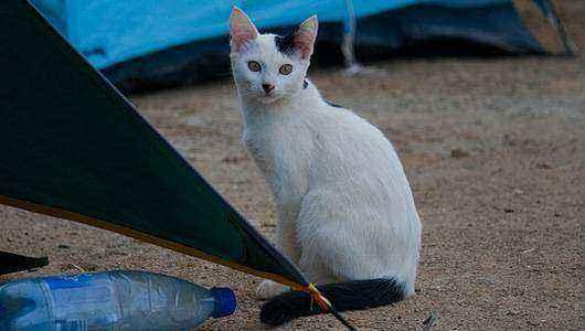 кошка с забавным окрасом