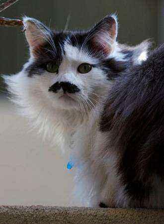 кошка с черными усами