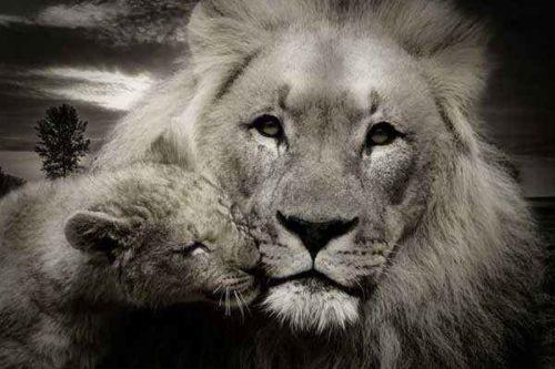 лев-и-львенок