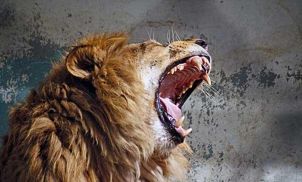 рык-льва