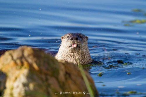 Флора и фауна болота - Какие животные обитают на болоте? 5
