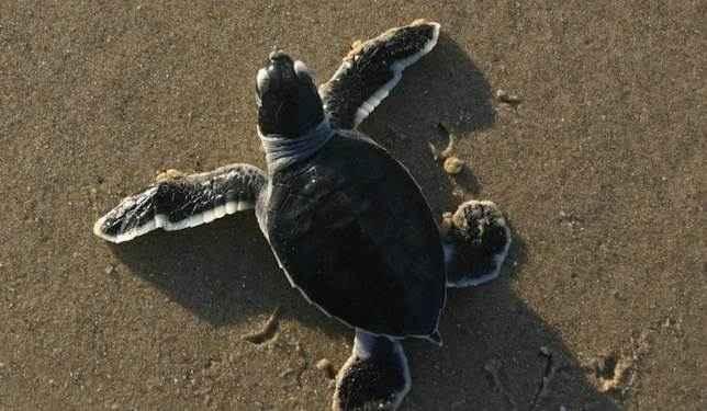 черепаха морская