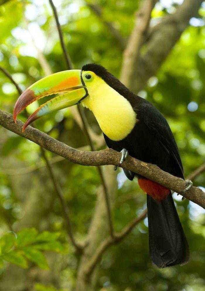 Отряды класса птиц - список, названия, фото и краткое описание 11