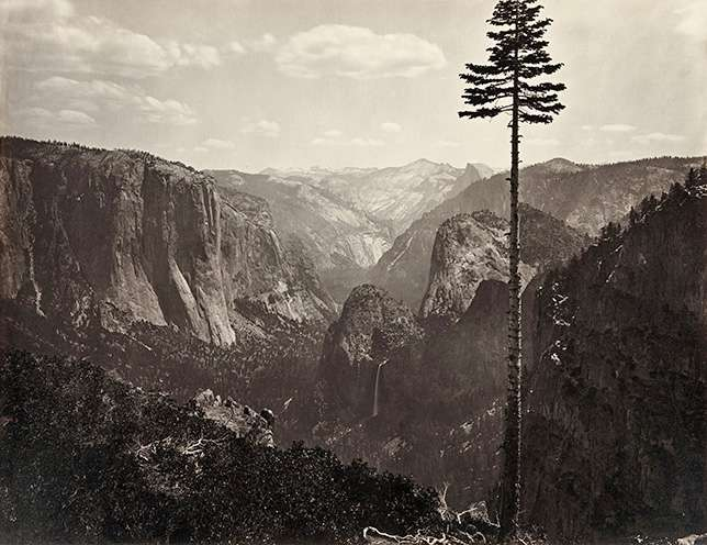 02-carleton-watkins-yosemite-valley-tree