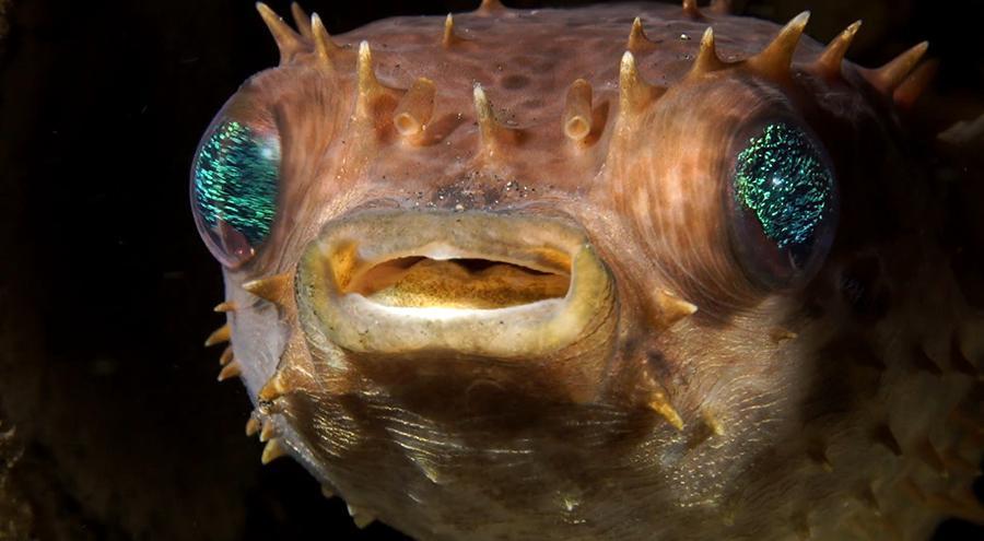 glittery-eyes