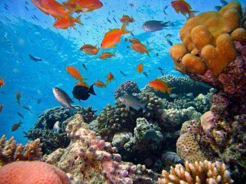 Животный и растительный мир Тихого океана 3