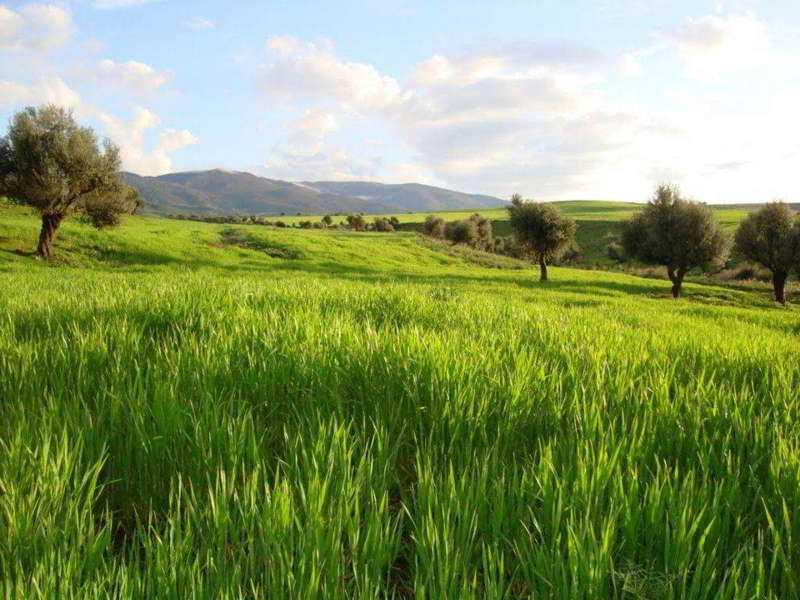 Край-Алжир