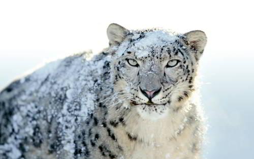 Какие животные обитают в Казахстане? 2