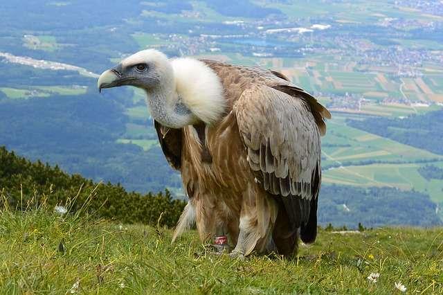 Природа Австрии 16
