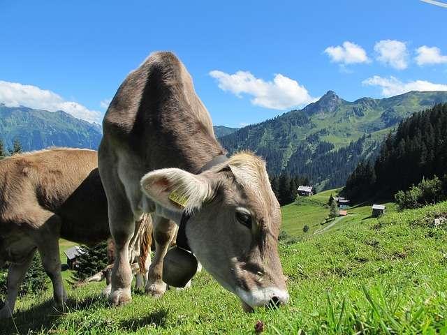 Природа Австрии 14