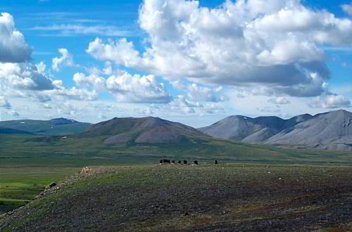 среда обитания овцебыков