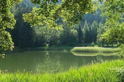 Австрия, пруд, вода, лес, деревья, лето, весна