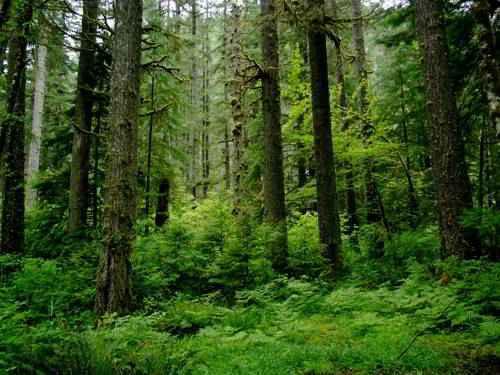 Лесной биом