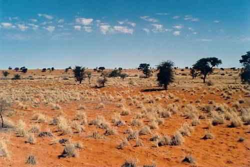 Пустынный биом