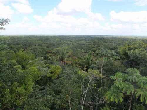 тропический лес в Белизе