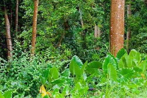 тропический лес характеристика