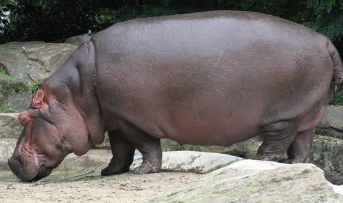 Травоядные, или растительноядные животные: особенности, список, виды и фото 13