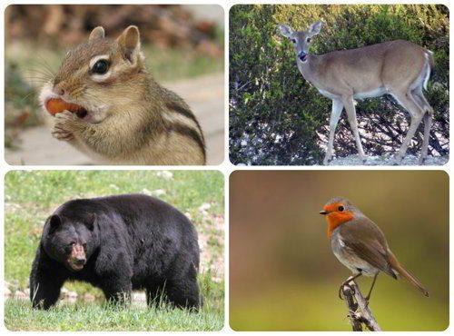 Животные в лесах умеренного пояса