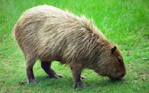 Травоядные, или растительноядные животные: особенности, список, виды и фото 3