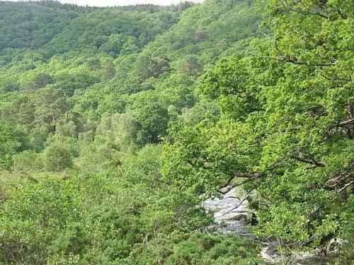 Какие животные обитают в лесах - названия, фото и описание 4